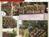 23-pagina-dreapta-jardin-4